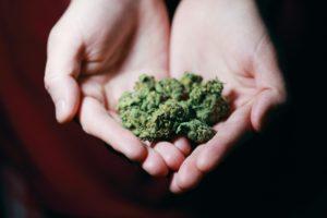 Abogado Cannabis